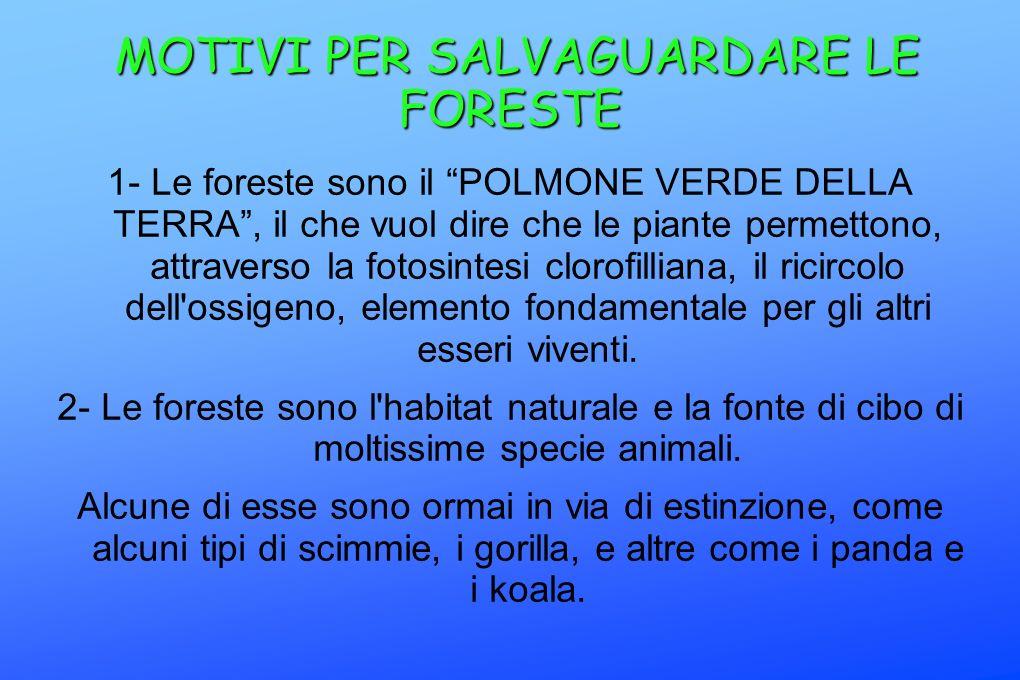 MOTIVI PER SALVAGUARDARE LE FORESTE