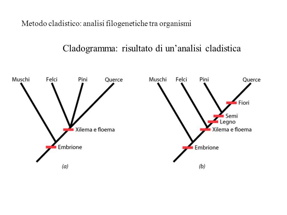Cladogramma: risultato di un'analisi cladistica