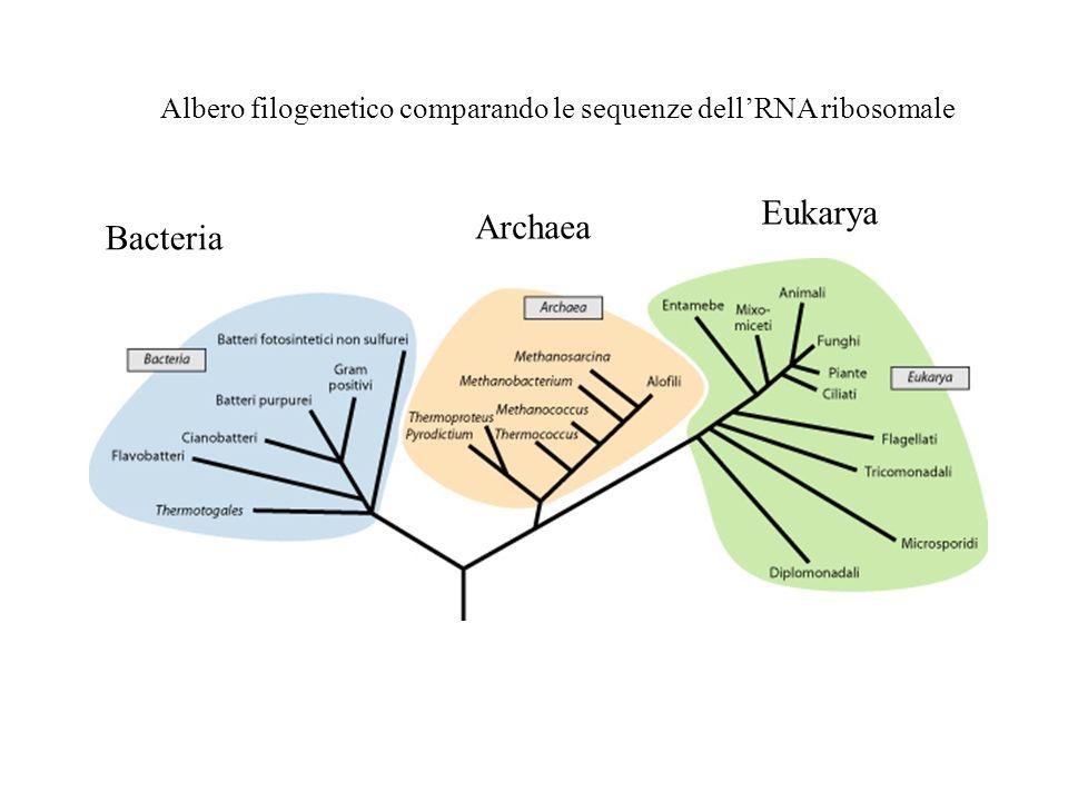 Eukarya Archaea Bacteria
