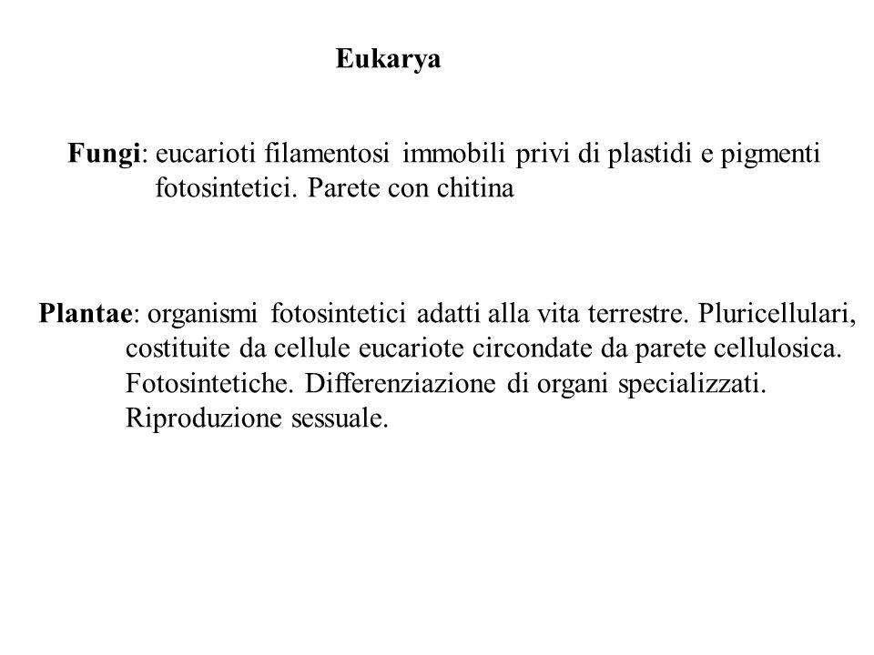 Eukarya Fungi: eucarioti filamentosi immobili privi di plastidi e pigmenti. fotosintetici. Parete con chitina.