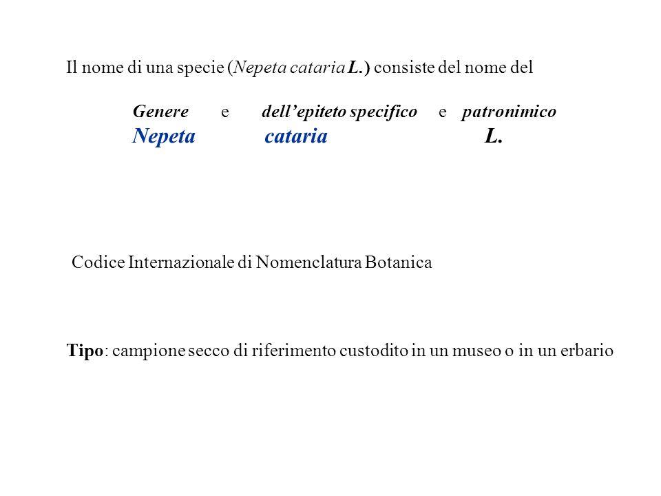 Il nome di una specie (Nepeta cataria L.) consiste del nome del