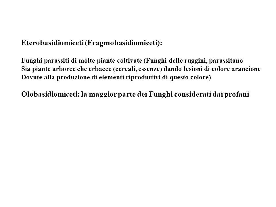 Eterobasidiomiceti (Fragmobasidiomiceti):