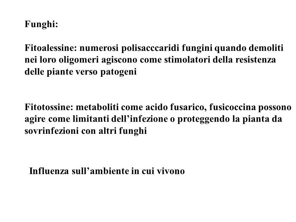 Funghi: Fitoalessine: numerosi polisacccaridi fungini quando demoliti. nei loro oligomeri agiscono come stimolatori della resistenza.