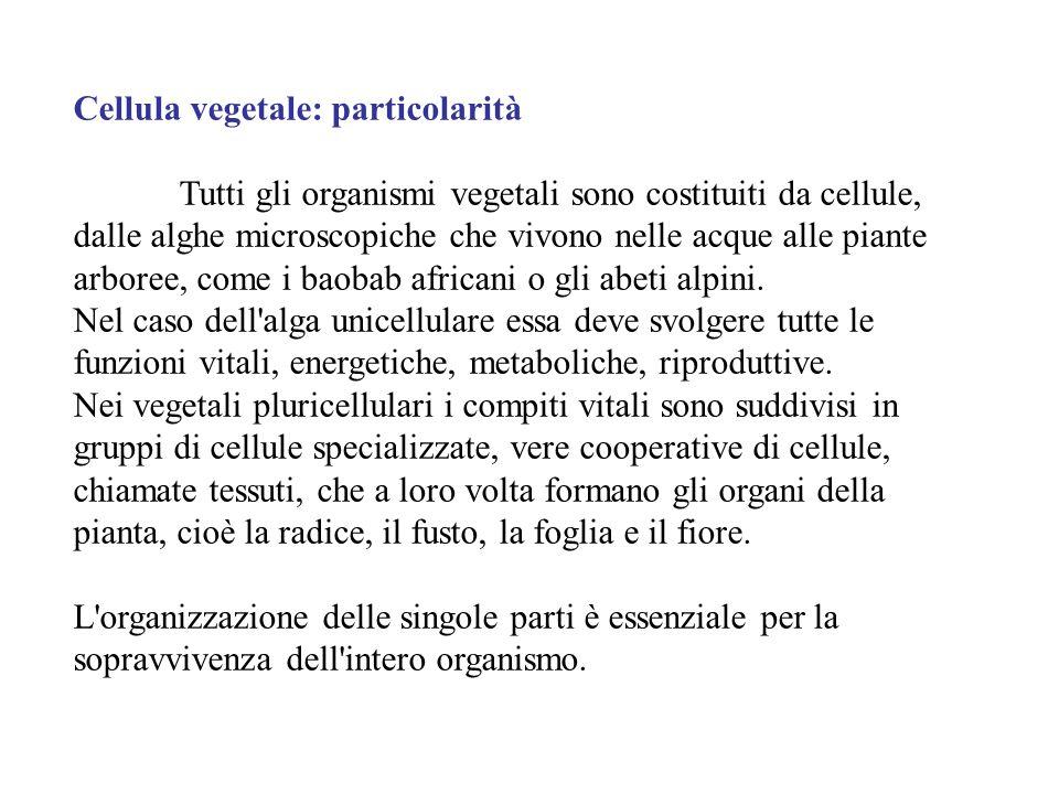 Cellula vegetale: particolarità