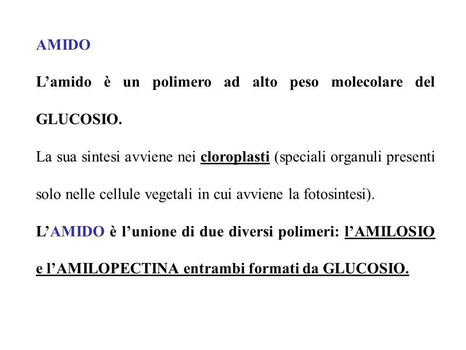AMIDO L'amido è un polimero ad alto peso molecolare del GLUCOSIO.