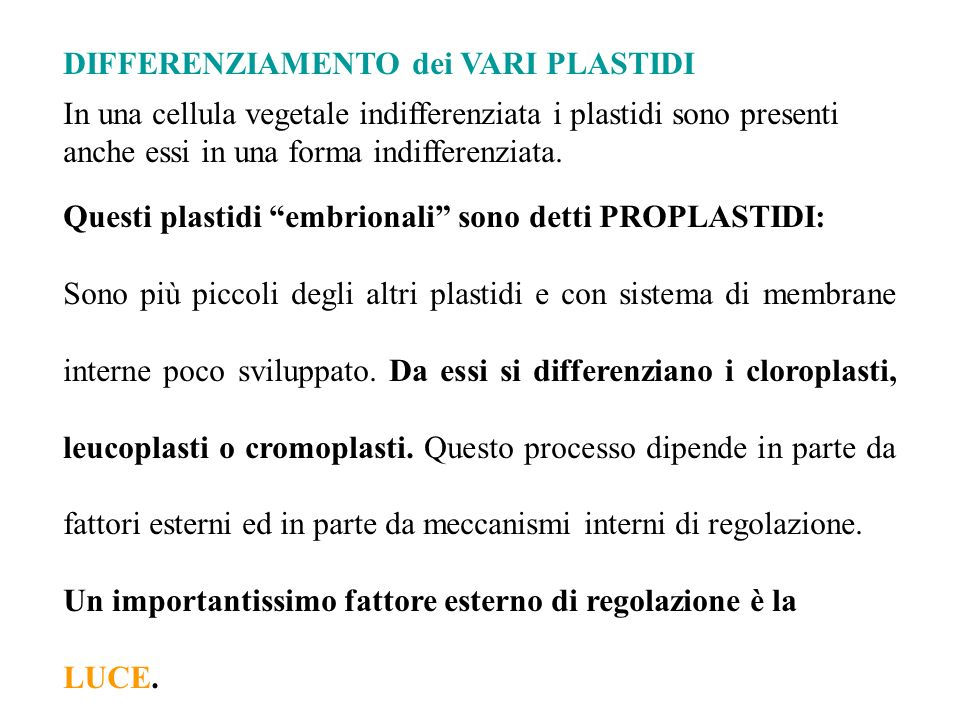 DIFFERENZIAMENTO dei VARI PLASTIDI