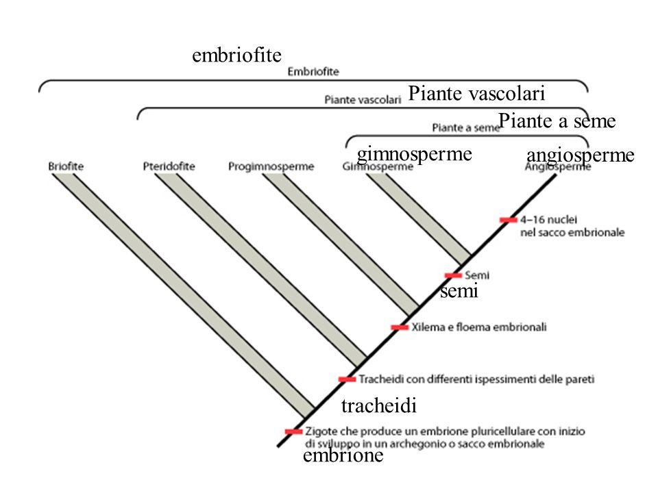 embriofite Piante vascolari Piante a seme gimnosperme angiosperme semi tracheidi embrione