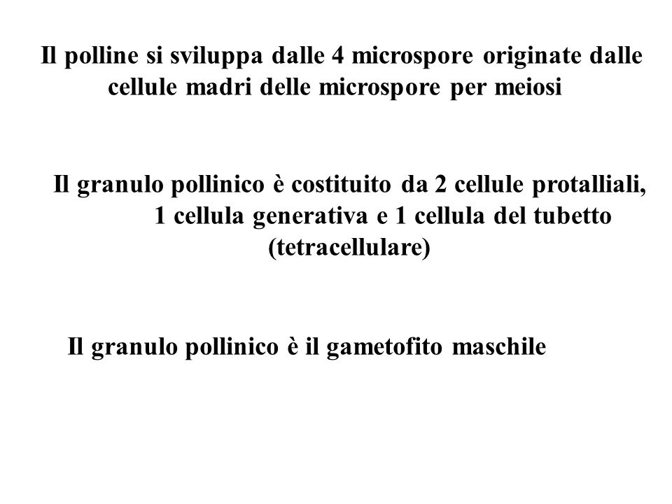 Il polline si sviluppa dalle 4 microspore originate dalle