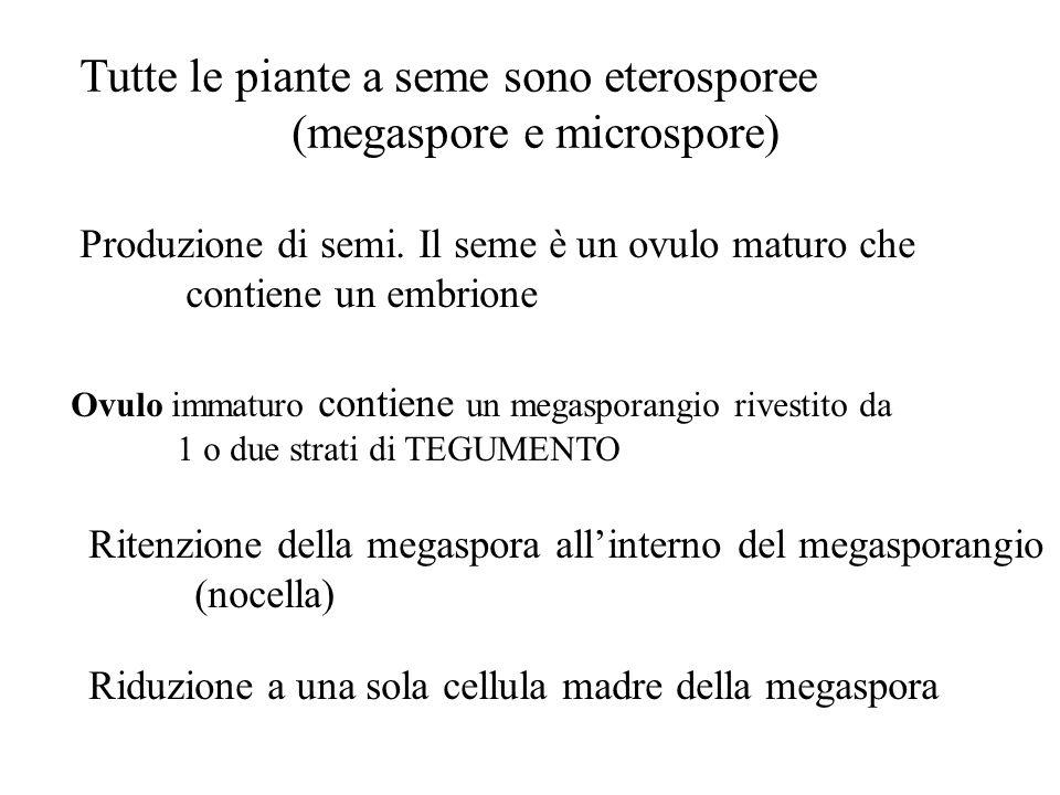 Tutte le piante a seme sono eterosporee (megaspore e microspore)