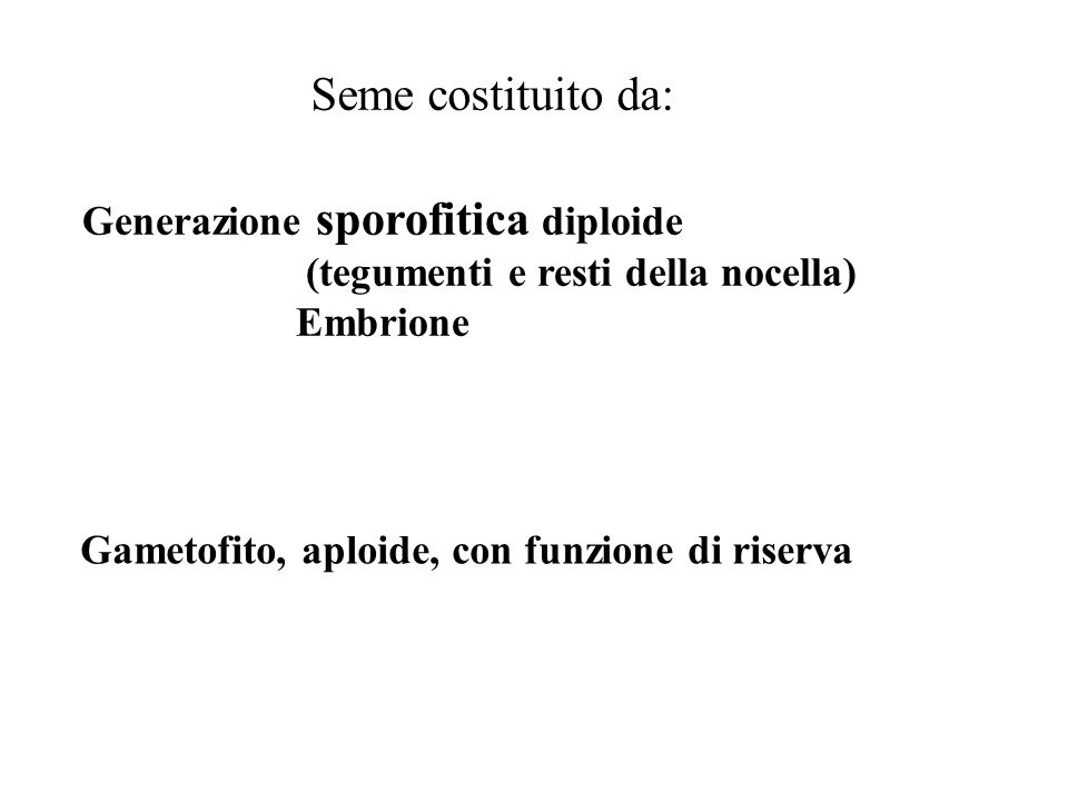 Seme costituito da: Generazione sporofitica diploide