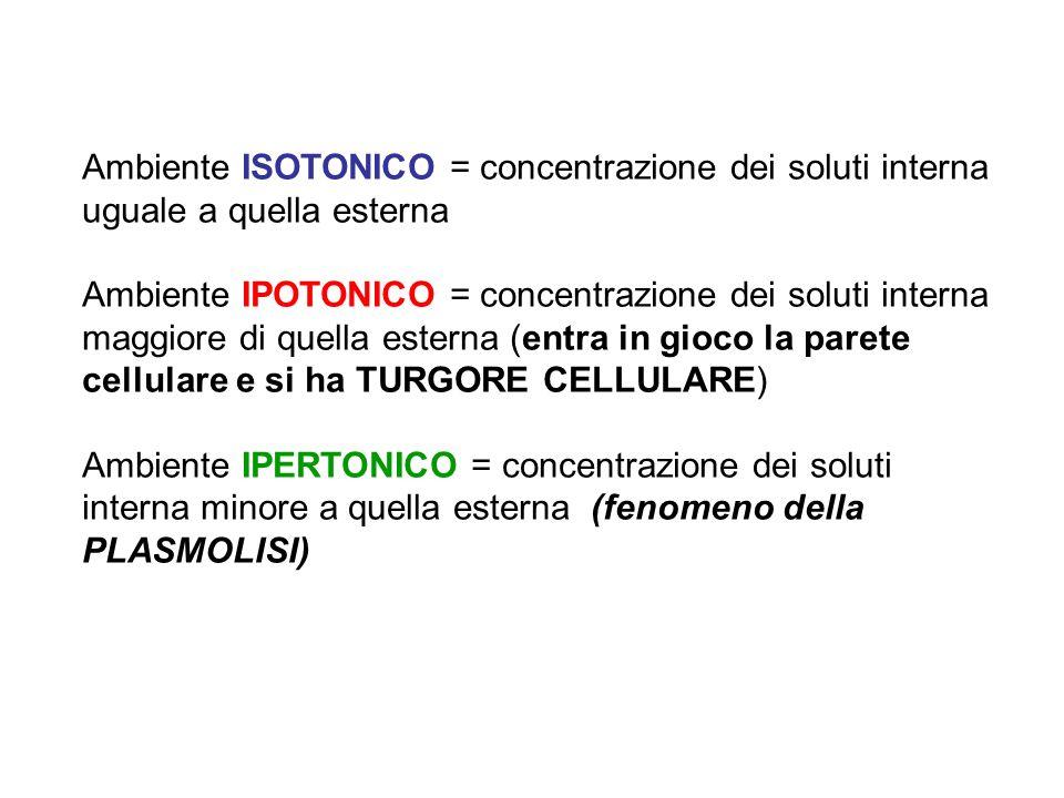 Ambiente ISOTONICO = concentrazione dei soluti interna uguale a quella esterna