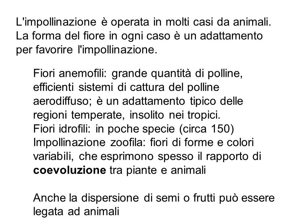 L impollinazione è operata in molti casi da animali