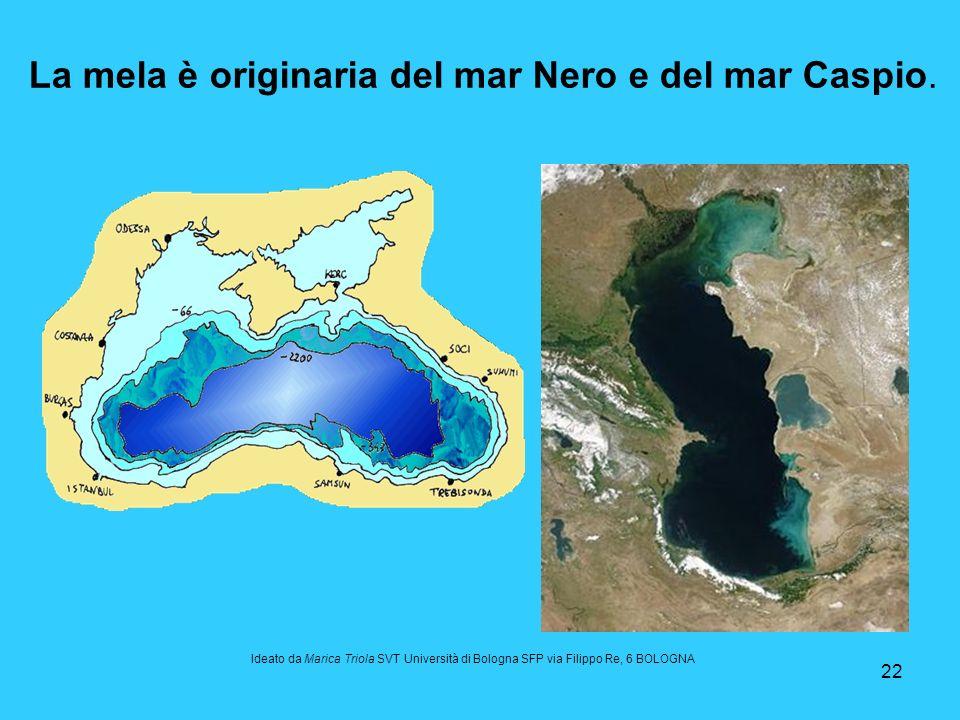 La mela è originaria del mar Nero e del mar Caspio.