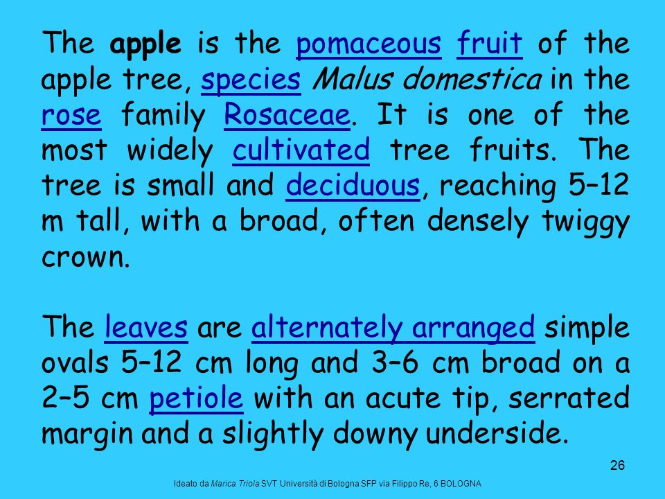 The apple is the pomaceous fruit of the apple tree, species Malus domestica in the rose family Rosaceae. It is one of the most widely cultivated tree fruits. The tree is small and deciduous, reaching 5–12 m tall, with a broad, often densely twiggy crown.