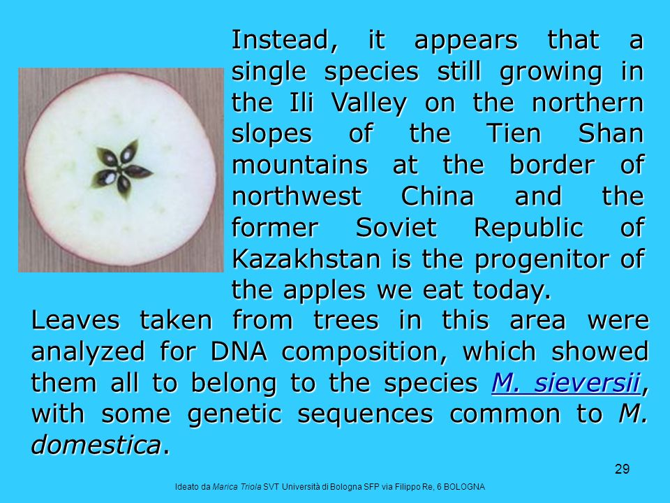 Instead, it appears that a single species still growing in the Ili Valley on the northern slopes of the Tien Shan mountains at the border of northwest China and the former Soviet Republic of Kazakhstan is the progenitor of the apples we eat today.