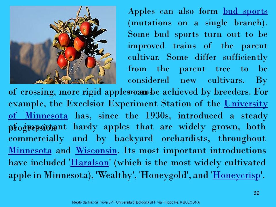 Apples can also form bud sports (mutations on a single branch)