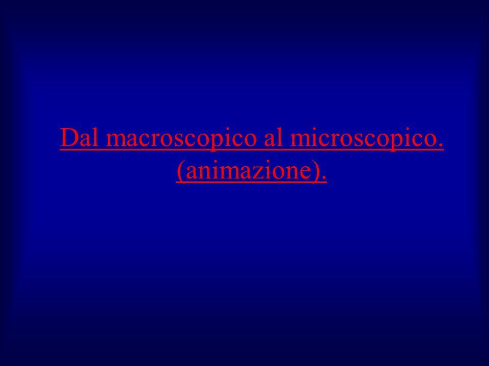 Dal macroscopico al microscopico. (animazione).