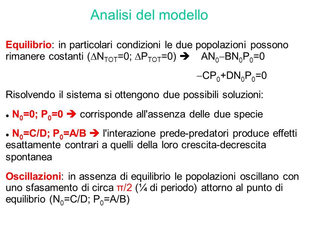 Analisi del modelloEquilibrio: in particolari condizioni le due popolazioni possono rimanere costanti (NTOT=0; PTOT=0)  AN0BN0P0=0.