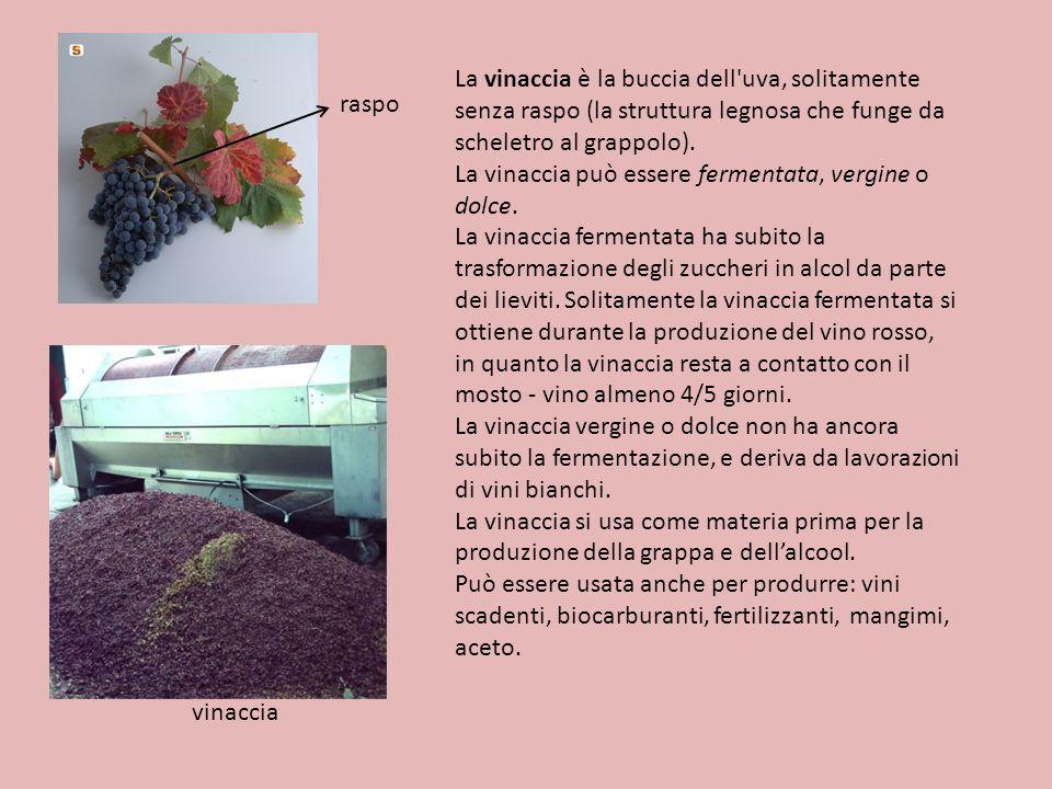 La vinaccia è la buccia dell uva, solitamente senza raspo (la struttura legnosa che funge da scheletro al grappolo).