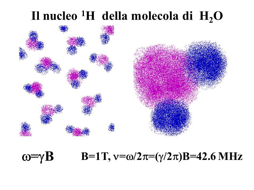 Il nucleo 1H della molecola di H2O