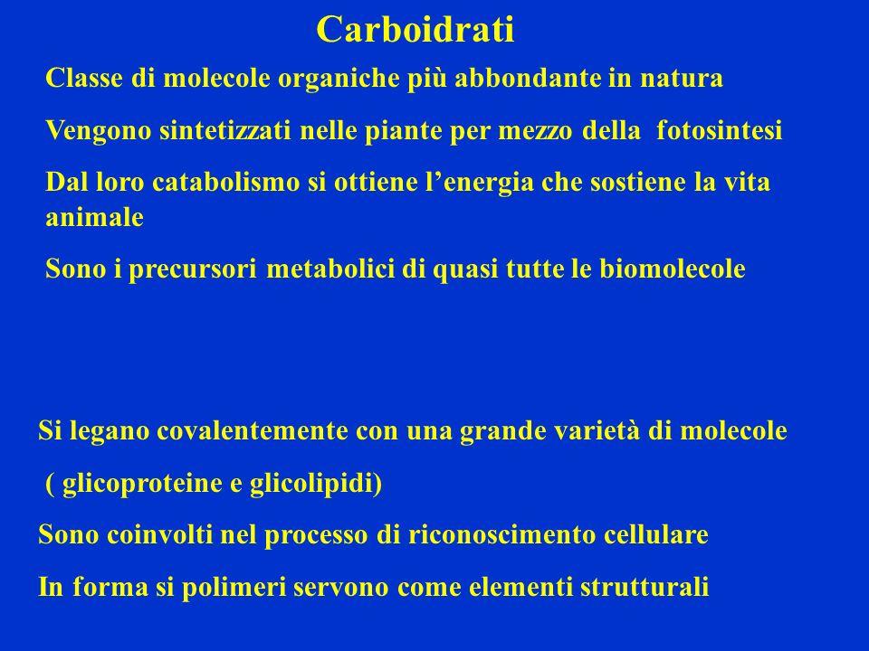 Carboidrati Classe di molecole organiche più abbondante in natura