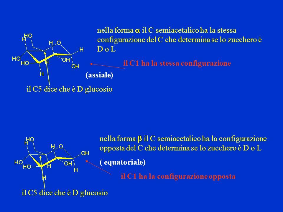 il C5 dice che è D glucosio il C1 ha la stessa configurazione