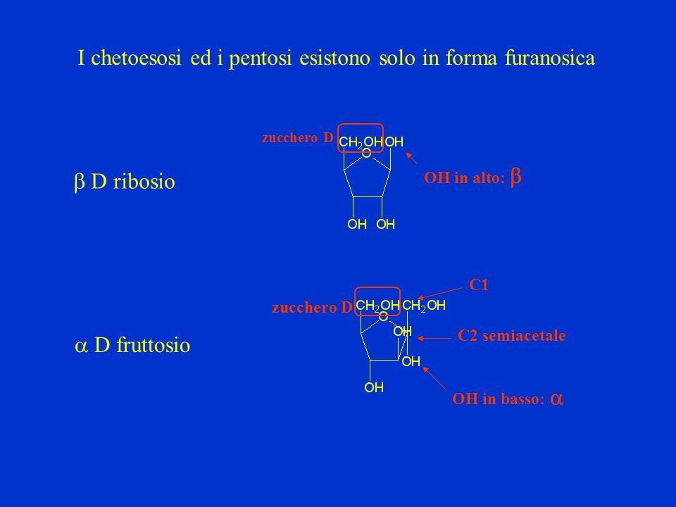 I chetoesosi ed i pentosi esistono solo in forma furanosica