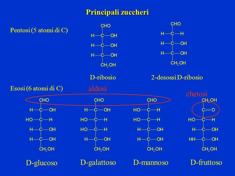 Principali zuccheri aldosi chetosi D-glucoso D-galattoso D-mannoso