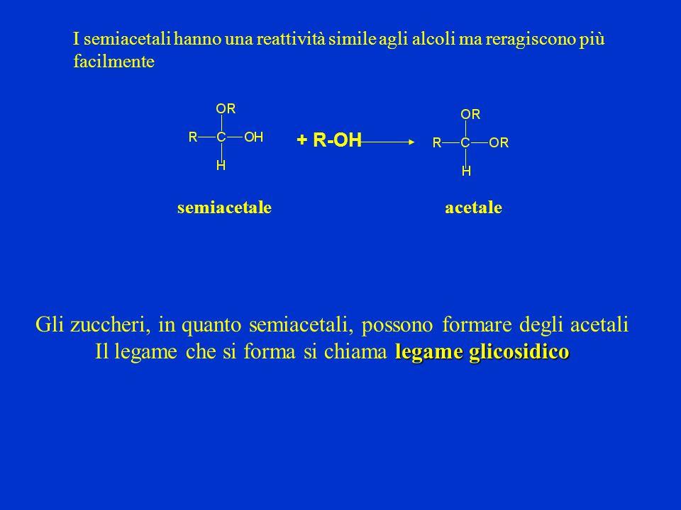 Gli zuccheri, in quanto semiacetali, possono formare degli acetali