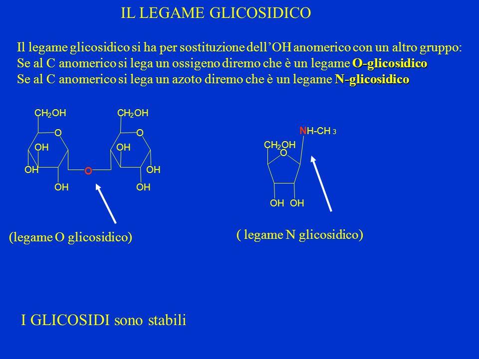 (legame O glicosidico)