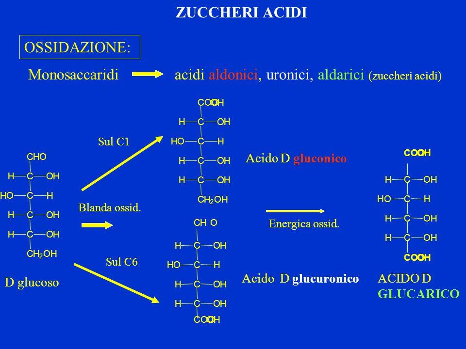 Monosaccaridi acidi aldonici, uronici, aldarici (zuccheri acidi)