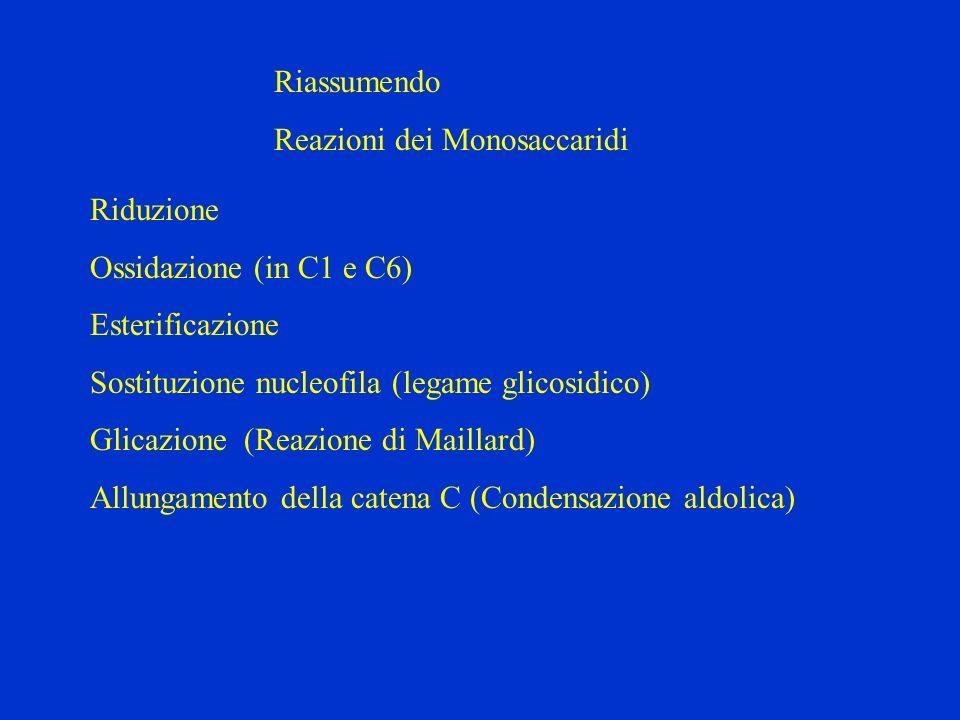 Riassumendo Reazioni dei Monosaccaridi. Riduzione. Ossidazione (in C1 e C6) Esterificazione. Sostituzione nucleofila (legame glicosidico)
