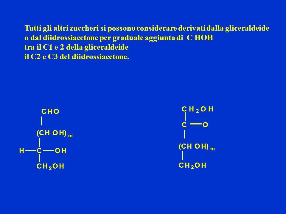 tra il C1 e 2 della gliceraldeide il C2 e C3 del diidrossiacetone.