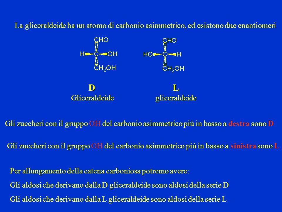La gliceraldeide ha un atomo di carbonio asimmetrico, ed esistono due enantiomeri