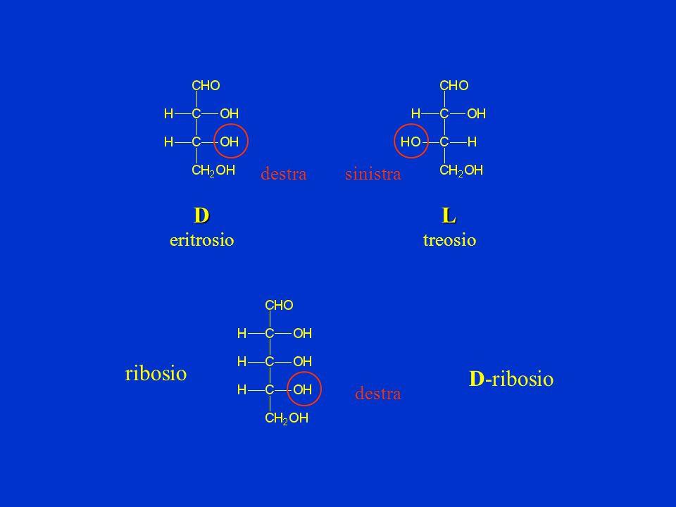 destra sinistra D eritrosio L treosio ribosio D-ribosio destra