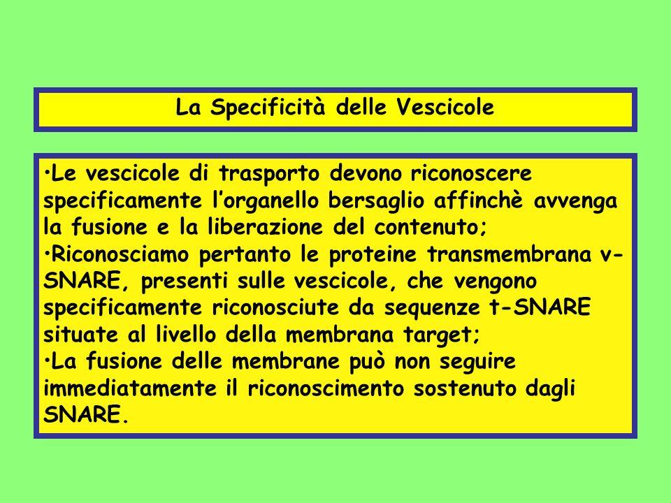 La Specificità delle Vescicole