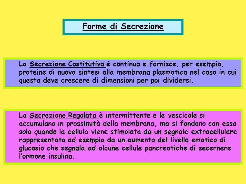 Forme di Secrezione