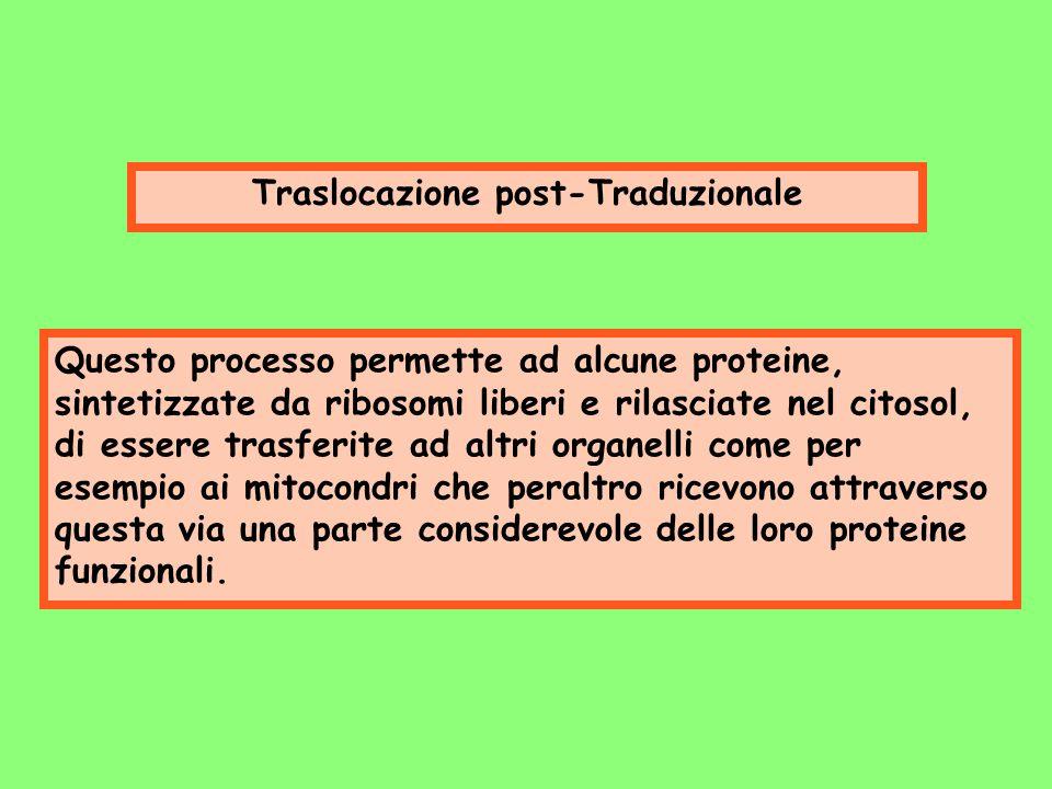 Traslocazione post-Traduzionale