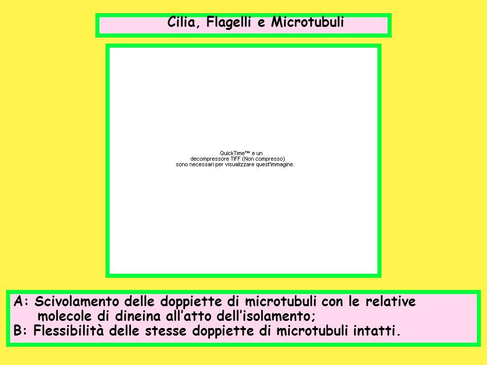 Cilia, Flagelli e Microtubuli