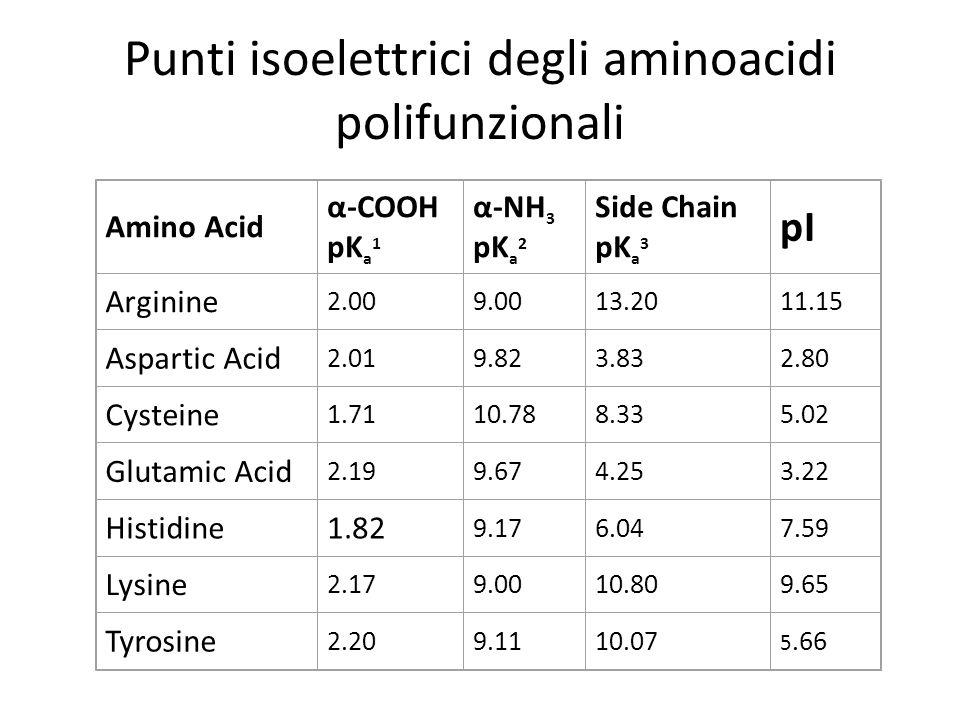 Punti isoelettrici degli aminoacidi polifunzionali