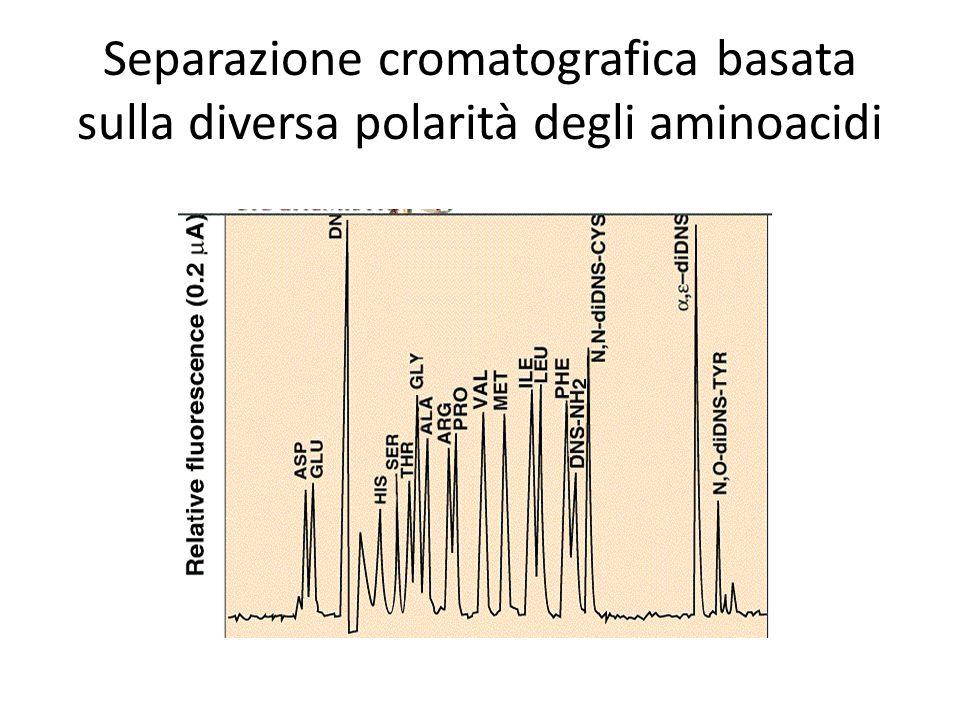 Separazione cromatografica basata sulla diversa polarità degli aminoacidi