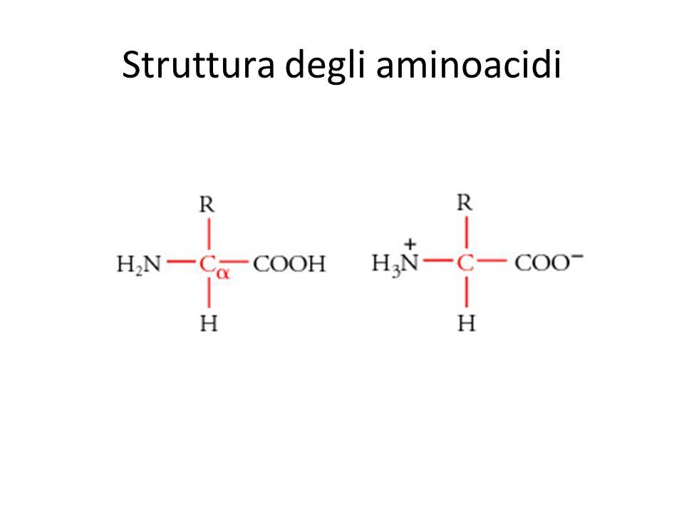Struttura degli aminoacidi