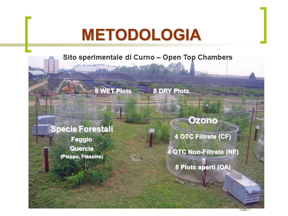 METODOLOGIA Ozono Specie Forestali