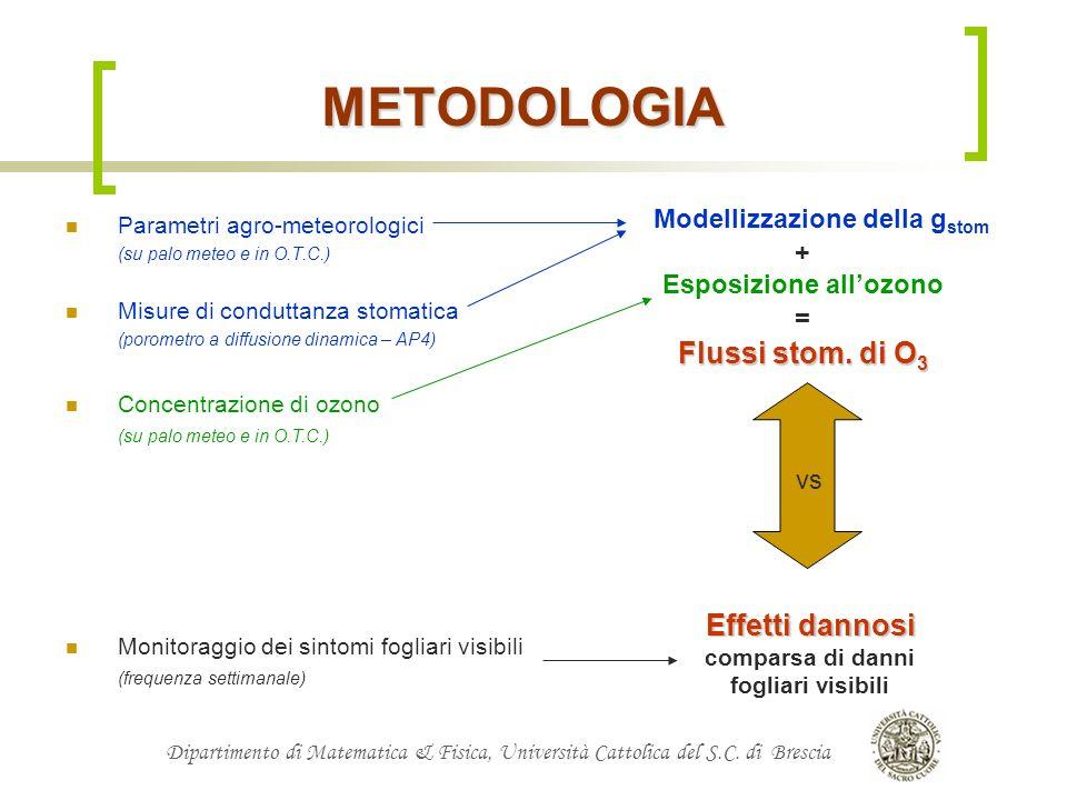 Modellizzazione della gstom Esposizione all'ozono