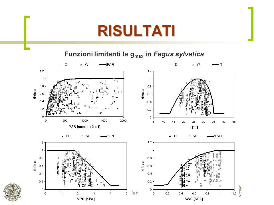 RISULTATI Funzioni limitanti la gmax in Fagus sylvatica