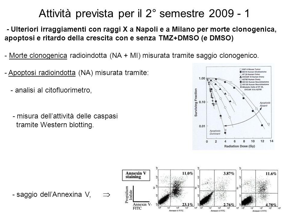 Attività prevista per il 2° semestre 2009 - 1