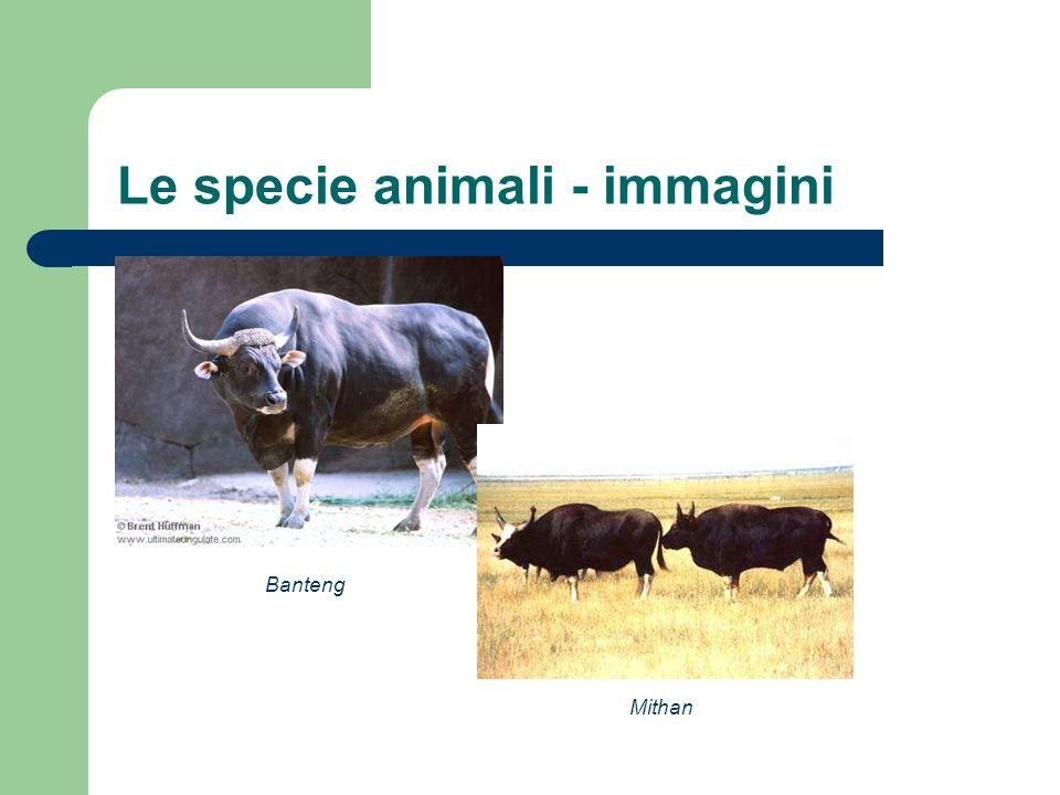 Le specie animali - immagini