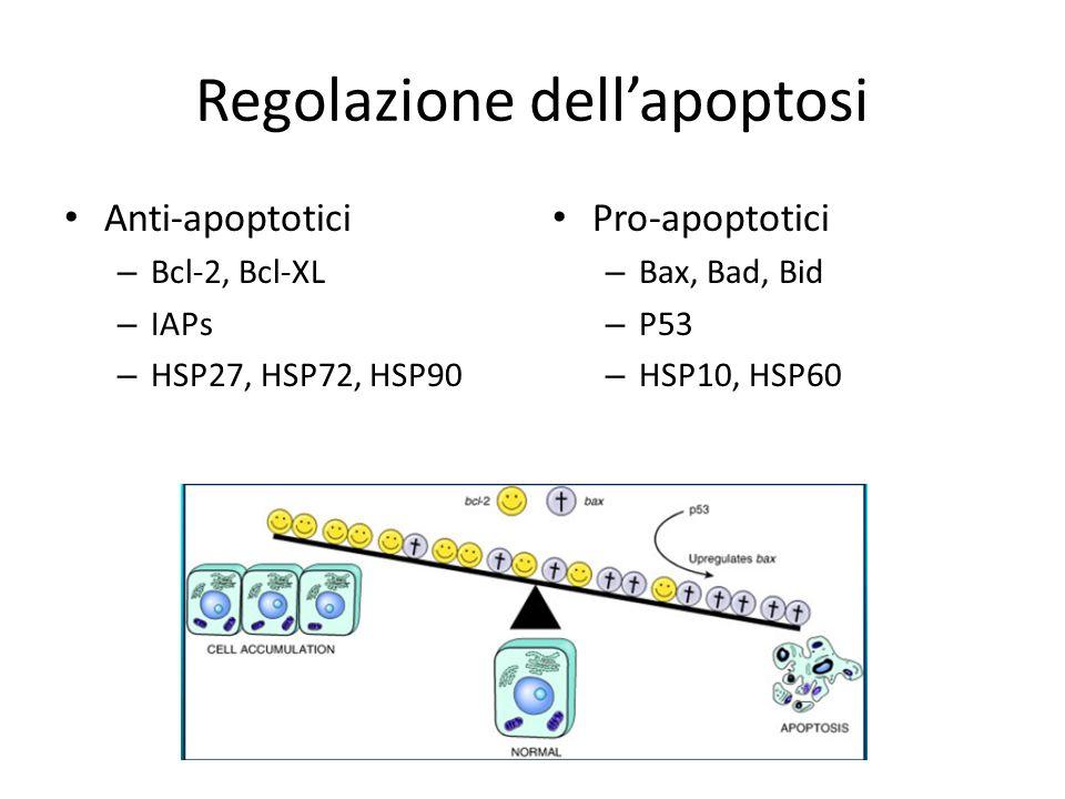 Regolazione dell'apoptosi