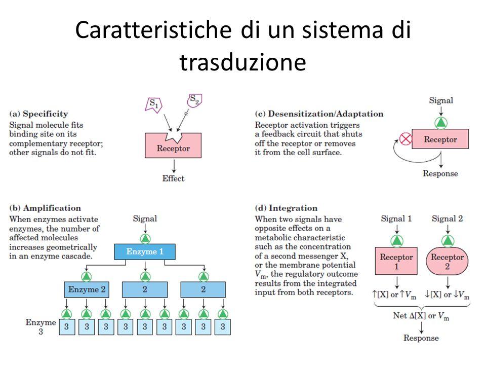 Caratteristiche di un sistema di trasduzione