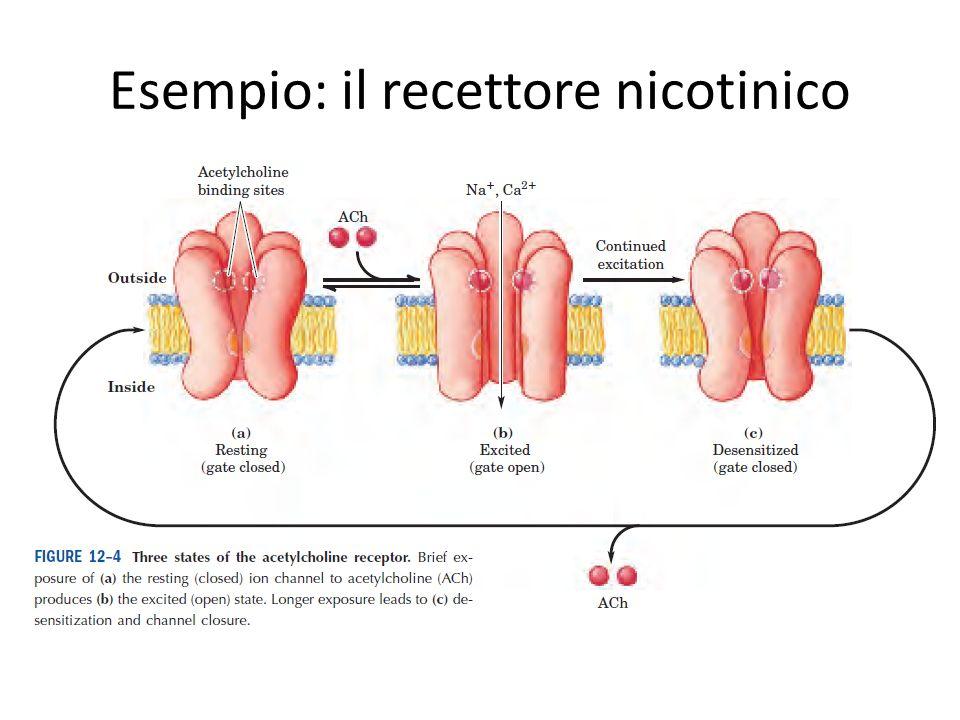 Esempio: il recettore nicotinico